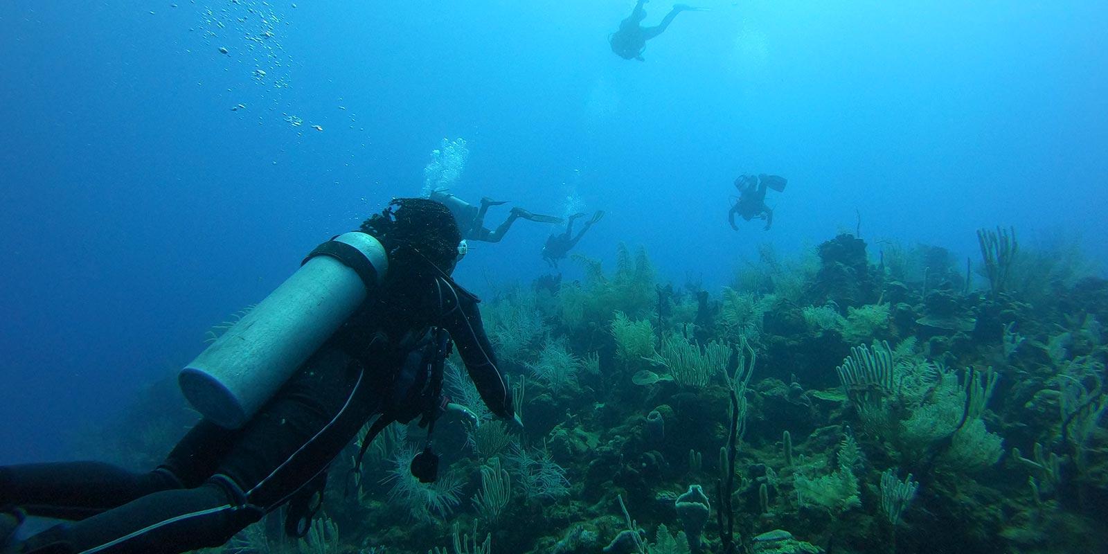 Belize Dive Package
