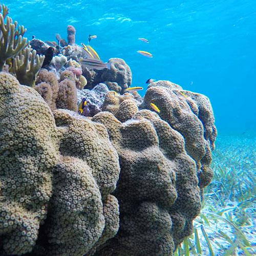 Belize local dive tours