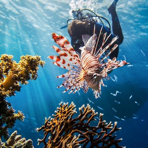 Belize Fishing Tours Lionfish