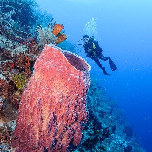 Belize Glover's Reef diving