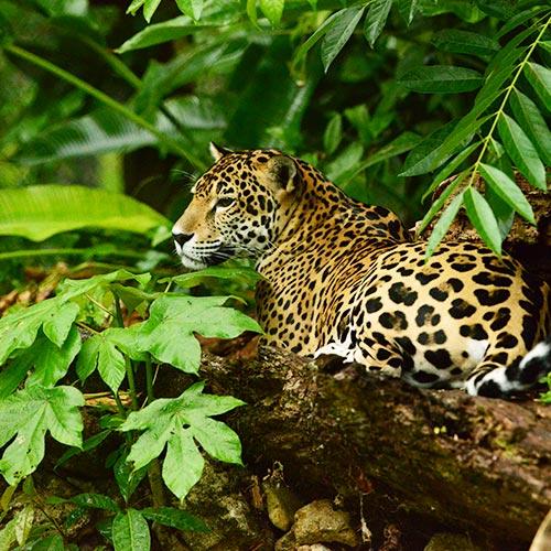 Belize jungle adventure tours - cockscomb