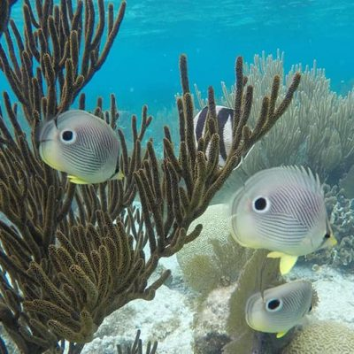 Belize Snorkeling Package