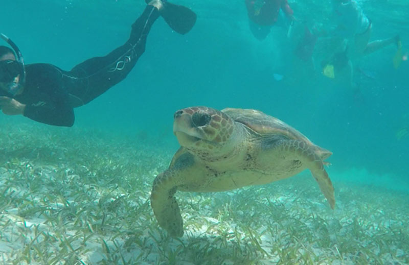 Belize tours snorkel